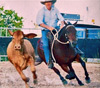 Bloom campdrafting at Charters Towers