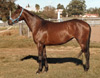 Daylight regarded by Robert Doolin as one of his best mares