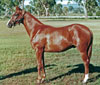 Inca Sun as a yearling