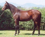 Mist as a yearling