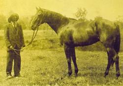 Haydon Tester 1888-1904