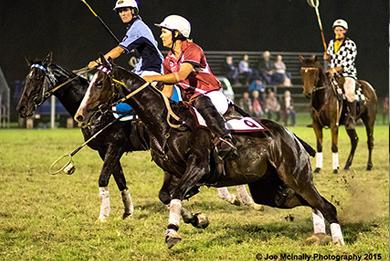 Polocrosse Horses