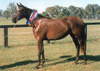 Night Beam won Champion Yearling at Scone before topping the National Sale