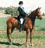 Ballet ridden Cathy Hunt winner numerous Champion Hacks and Lady Riders, Sledmere Cup 1989