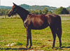 Bouquet as a yearling