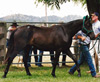 Mantilla top priced filly 1997 HHS sale