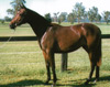 Sunflower as a yearling 1995