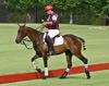 Velvet Ellerston 2008 Final ridden by Glen Gilmore