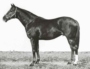 Champion Wilkes-sire of Vain