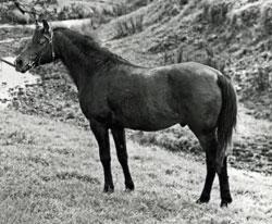 Beranghi-1975