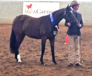 patton-out-of-sun-dial-winner-yearling-filly-nationals-2012