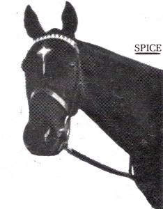 spice-head-shot