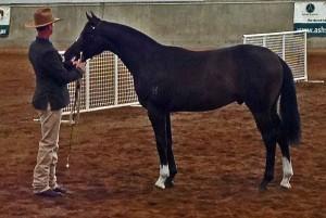 zorba-winner-yearling-colt-2012-nationals